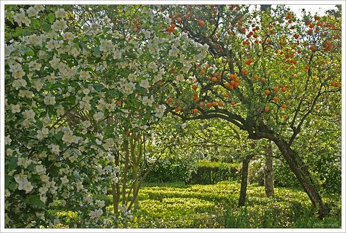 jardin-sevilla2
