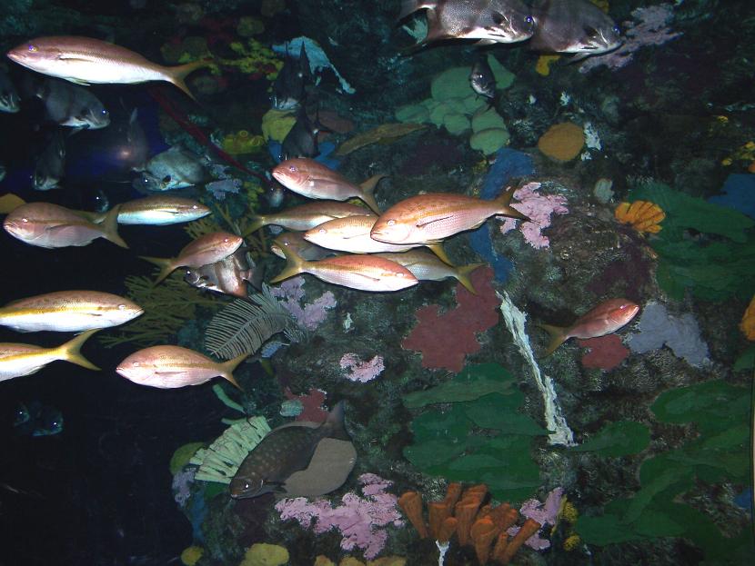 peces pez
